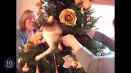 Gatti e alberi di Natale: un rapporto difficile