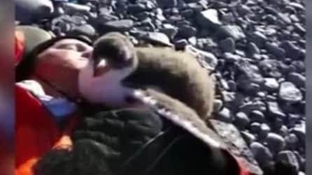 Antartide, il baby pinguino si avvicina al turista in cerca di affetto
