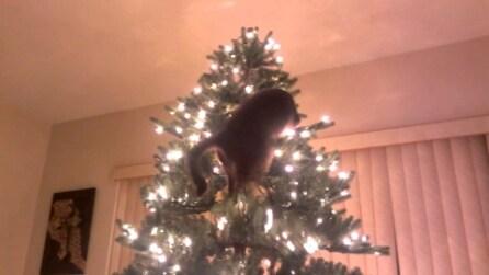 Gatto vs albero di Natale, il risultato non può che essere questo