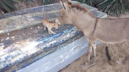 La tenera amicizia tra un asino e un gatto