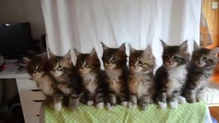 I gattini ballano sincronizzati a ritmo di musica