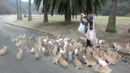 L'isola dei conigli si trova in Giappone