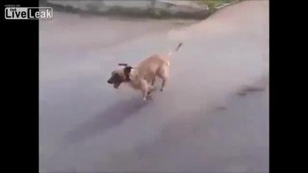 Cane insegue l'ambulanza che trasporta il suo padrone