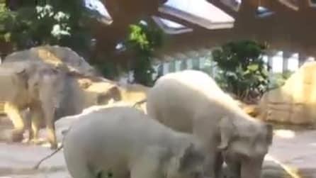 Adorabile cucciolo di elefante cade solo per essere salvato dai suoi genitori