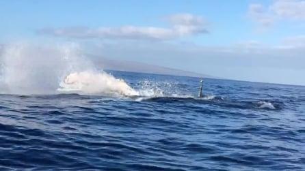 Un balena urta contro la loro barca, rischiando di rovesciarla