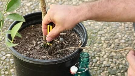 Come innaffiare le tue piante quando non ci sei