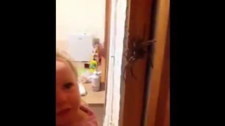 La bambina che non ha paura del ragno