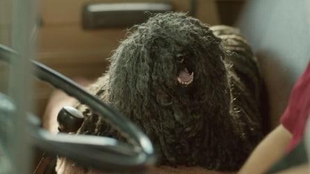 """Il fattorino si prende cura di un trovatello: il cane """"mocio"""" conquista tutti"""