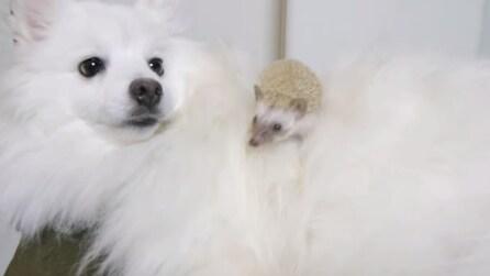 Cane e riccio amici per la pelle!