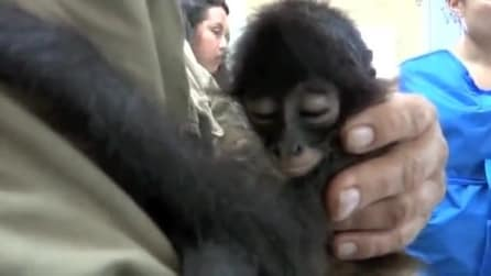 Qualcuno ha cercato di uccidere questa scimmietta: la salvano e lei reagisce così