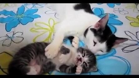Le coccole di mamma gatto al suo cucciolo
