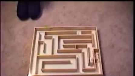 Il criceto nel labirinto: quanto ci metterà a trovare la strada giusta?