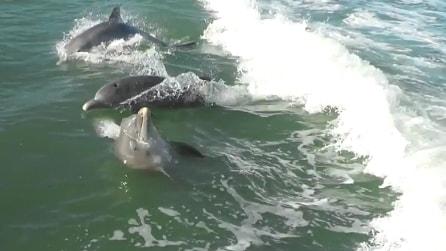Tre delfini si divertono a giocare insieme