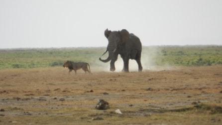 Le più grandi battaglie tra animali: prede contro predatori