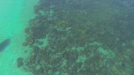 Alla scoperta dei fondali marini, ecco il drone subacqueo