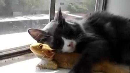 Il gatto e drago barbuto: un'amicizia particolare