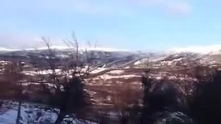 La pecora si crede un cane e gioca con due cani nella neve