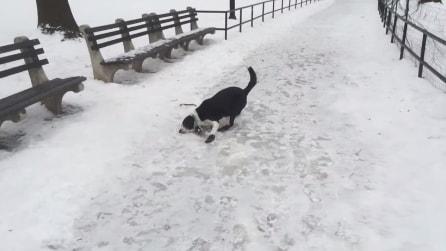 Deride il suo cane che scivola sul ghiaccio, poi ha la lezione che si merita