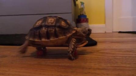 La tartaruga gira per casa sullo skateboard