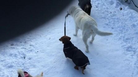 Labrador porta al guinzaglio il bassotto durante la passeggiata in montagna