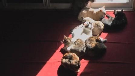 Gatti alla ricerca di un raggio di sole, il time-lapse