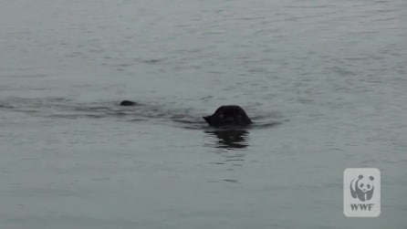 Vede una creatura misteriosa avvicinarsi alla sua barca, alla fine la scoperta emozionante