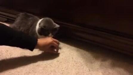 Il gatto che fa sparire i croccantini