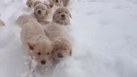Una valanga di cuccioli nella neve
