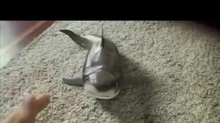 Lo squalo che finge di morire, la simpatica animazione
