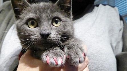 Fa applicare lo smalto rosa sulle unghie del gatto che poi ha una reazione allergica