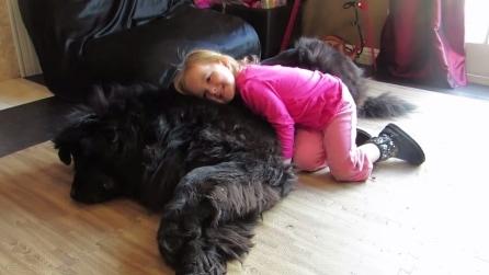 Piccola bambina, grande cane: il risultato è un immenso amore