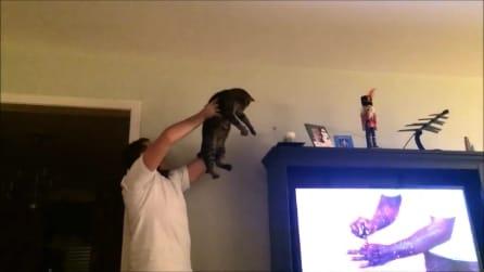 Mai più insetticida, ci pensa il gatto