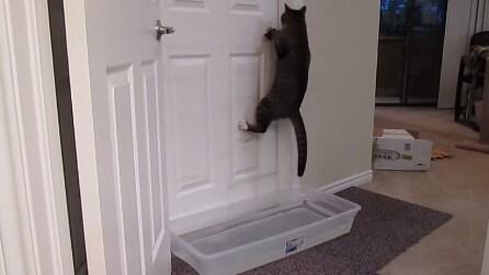 Il gatto che apre le porte e il padrone non riesce a fermarlo