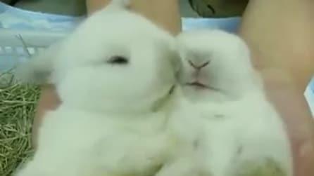 I due coniglietti più teneri al mondo