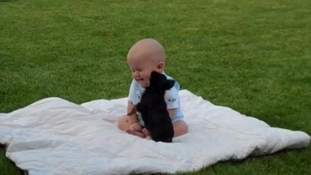 """Il cucciolo """"all'attacco"""" del neonato: che spettacolo"""