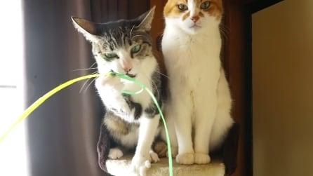 Il gatto dai riflessi incredibili, guardate quanto è bravo!