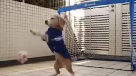 Il cane portiere: le para tutte!