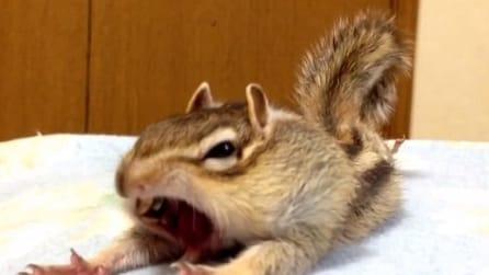 Sbadiglia e si stiracchia: il risveglio dello scoiattolo