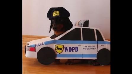 Bassotto travestito da poliziotto, ecco qual è la sua missione