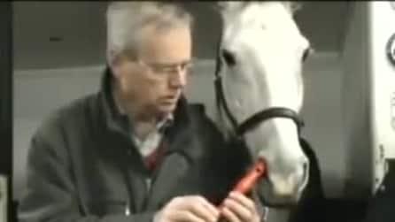Il cavallo che suona il flauto
