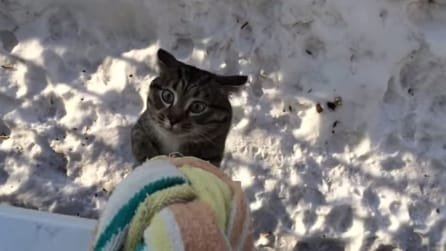 Gatto atletico: ecco come riesce a risalire il davanzale