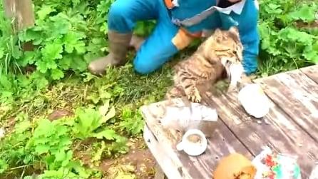 Pescatore ritira l'amo con il pesce, ma un gatto glielo porta via