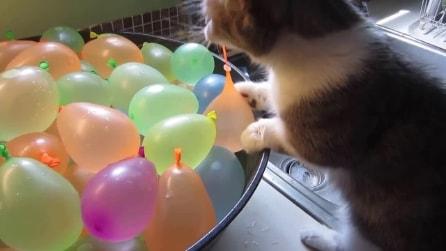 Il gatto trova dei palloncini pieni d'acqua, ne scoppia uno e reagisce così