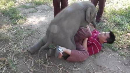 L'elefantino adora le coccole e gioca come fosse un cagnolino