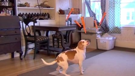 Cinque carote oscillano in casa e il cane affamato trova il rimedio geniale