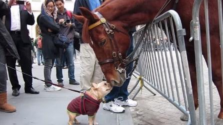 Un cagnolino e un cavallo s'incontrano: gli opposti si attraggono?