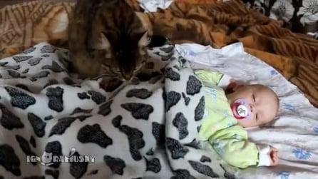 """Gatto """"baby sitter"""" culla il bimbo per farlo addormentare"""