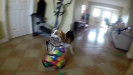 Gli danno le palline e lui invece di giocarci guardate cosa fa: di una tenerezza infinita