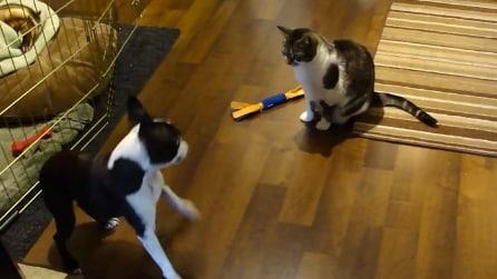 Il gatto sottrae il giocattolo al cane, guardate la divertente reazione del cucciolo
