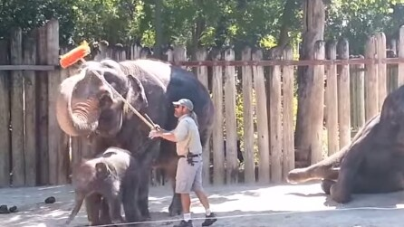 Gli passa lo spazzolone: guardate l'elefante come reagisce